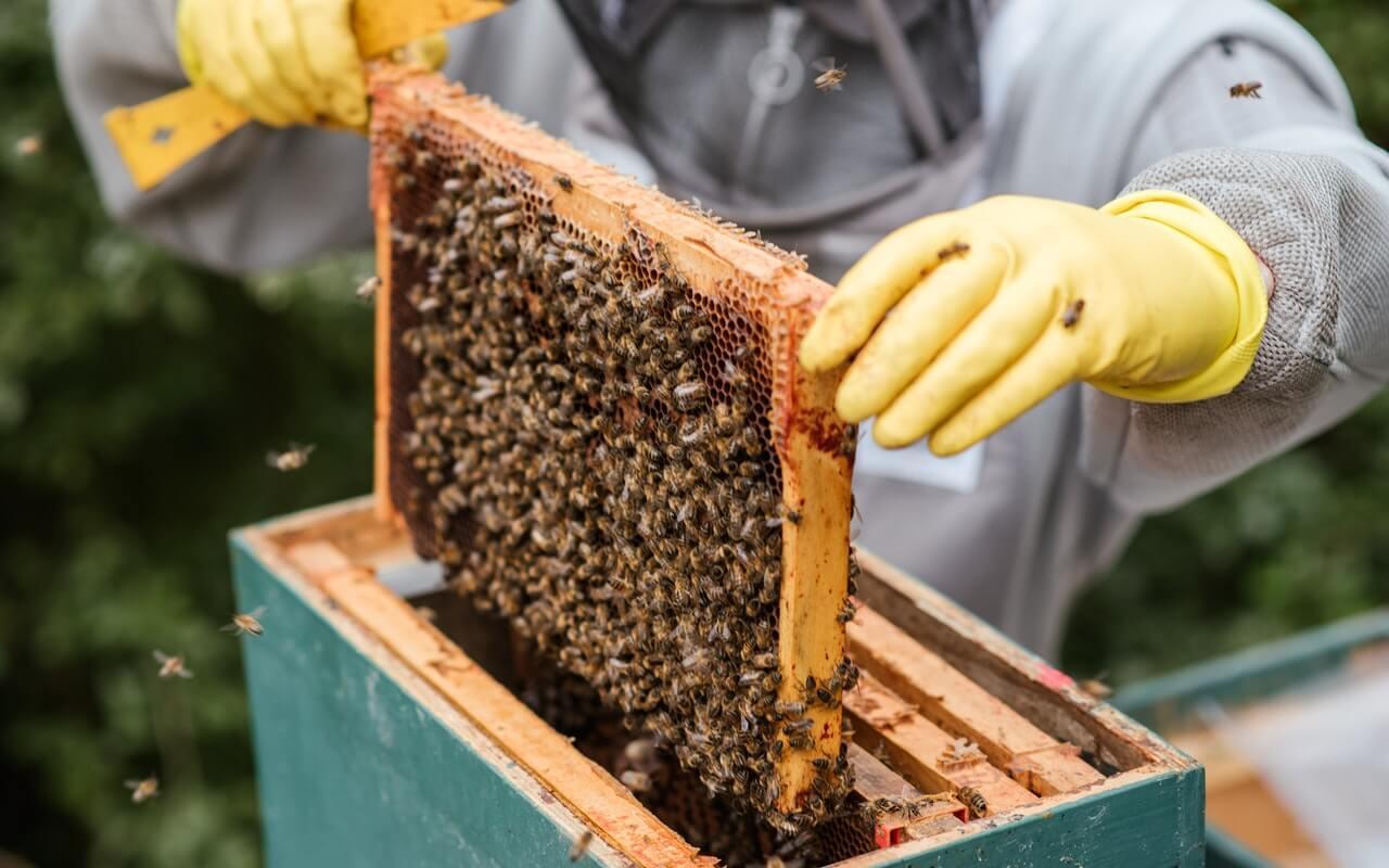 Pčelarstvo zaštitno odelo